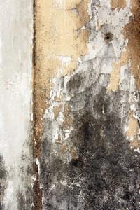 Stinky Smells In Your Home Identifying A Mold Issue